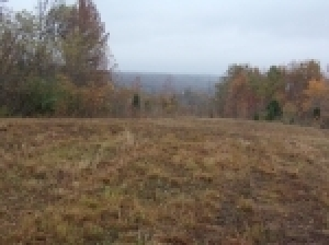 Online Bidding Only-48 Acres-Ends 11/16/17 @ 3 PM CST