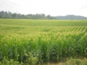 Online Bidding Only-41.566 Acres- Ends Aug. 13 @ 3pm EDT